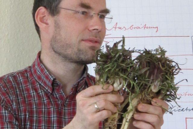 Gunnar Seibt zeigt eine Wurzel des Orientalischen Zackenschötchens