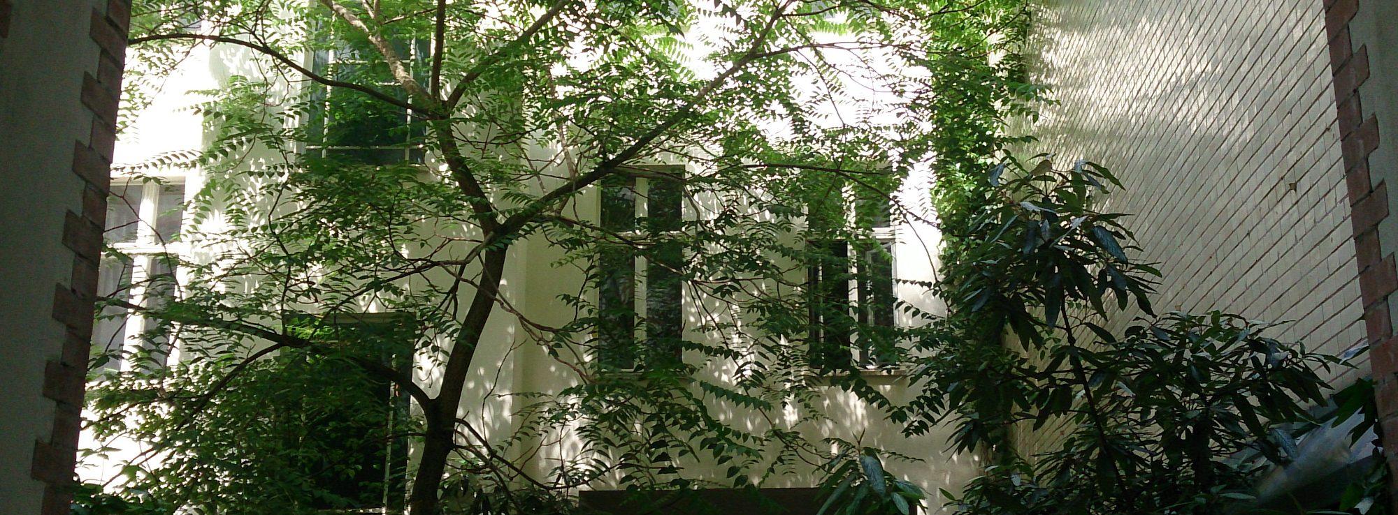 Götterbaum – Neu auf der Unionsliste